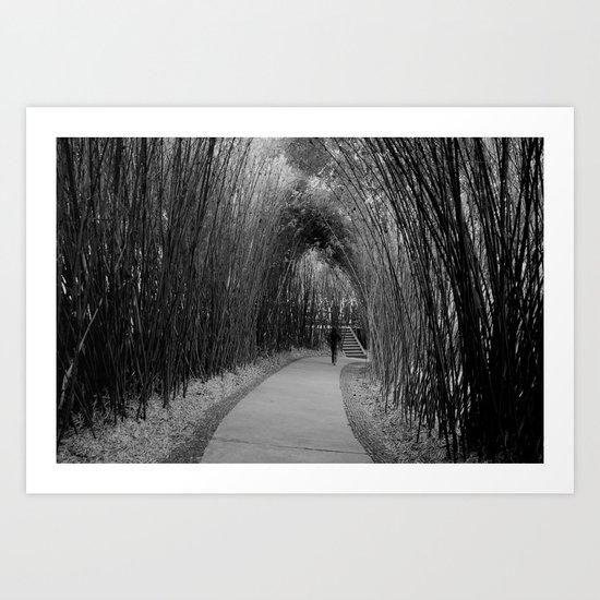 bamboo path  Art Print