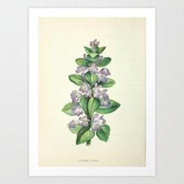 COMMON BUGLE Art Print