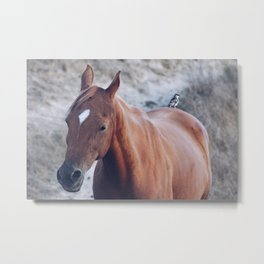 Horse Photography Metal Print