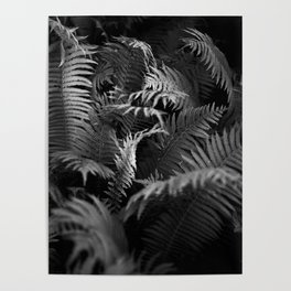 Fine Art Photography Black and White Ferns Poster