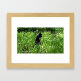 Cat, lawn and sunny day Framed Art Print
