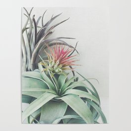 Air Plant Collection II Poster