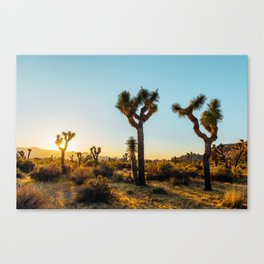 Last Light at Joshua Tree Canvas Print