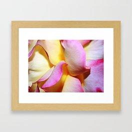 Peace Rose Petals Framed Art Print