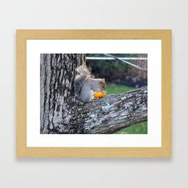 Cute Squirrel in Tree Eating Mini Pumpkin Framed Art Print
