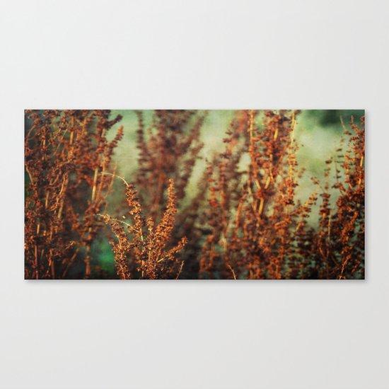 autumnal impression Canvas Print