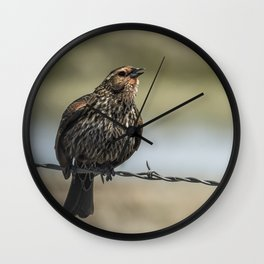 Female Red-winged Blackbird Puffed Up with Song Wall Clock