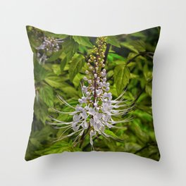 Cats Whiskers flower Throw Pillow