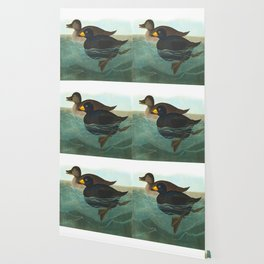 American Scoter Duck Audubon Birds Vintage Scientific Hand Drawn Illustration Wallpaper