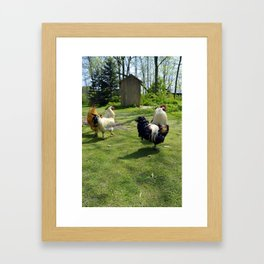 Roosters Framed Art Print