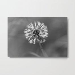 Dandelion, black and white Metal Print