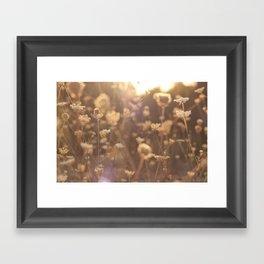 Sunflare II Framed Art Print