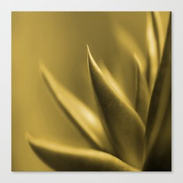 Succulent Plant In Golden Glow #decor #society6 #homedecor #buyart Canvas Print