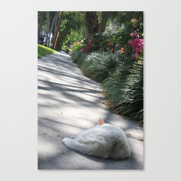 Nope Canvas Print