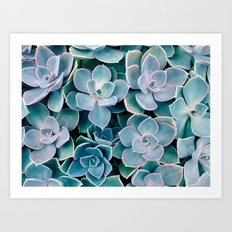 Succulents n.2 Art Print