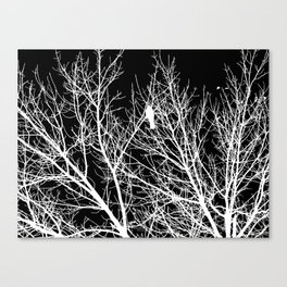 Modern Contemporary Black and White Tree Bird Art A539 Canvas Print