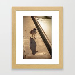Goeland Framed Art Print