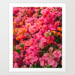 California Blooms VII Art Print