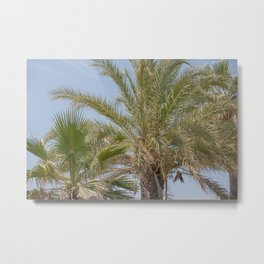 Summer vibes with the palm trees Metal Print