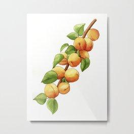 Apricot Branch Metal Print