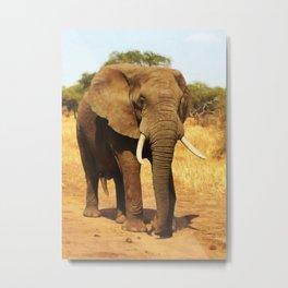 ELEPHANT WALK Metal Print