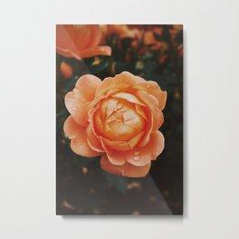 Simply a Rose Metal Print