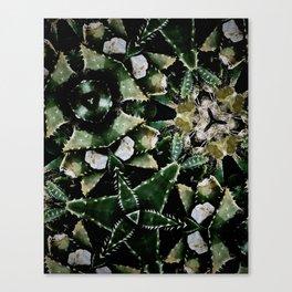Succulents on Show No 1 Canvas Print
