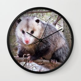 Possum Staredown Wall Clock