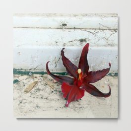 Web Decor - um Metal Print