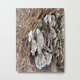 Fungus in muted colors Metal Print
