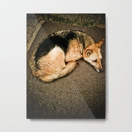 Dog disguised as a fox Metal Print