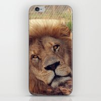 calvin hobbes iPhone & iPod Skins featuring Calvin by Katie Pelon