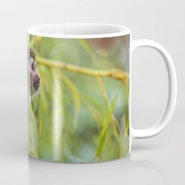 Squirrel Monkey wild animal in sunlight Coffee Mug