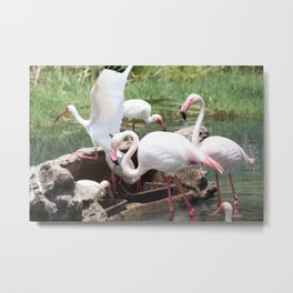 Pretty Flamencos Metal Print