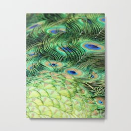 Feather Me Blue & Green (Peacock Feathers) Metal Print