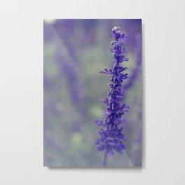 Purple Salvia Flower Metal Print