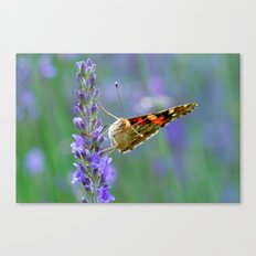 Butterfy 57 Canvas Print