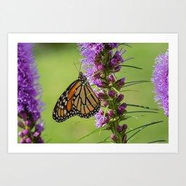 Summer Monarch Butterfly Art Print