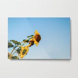 Helianthus Flower - Sunflower Metal Print