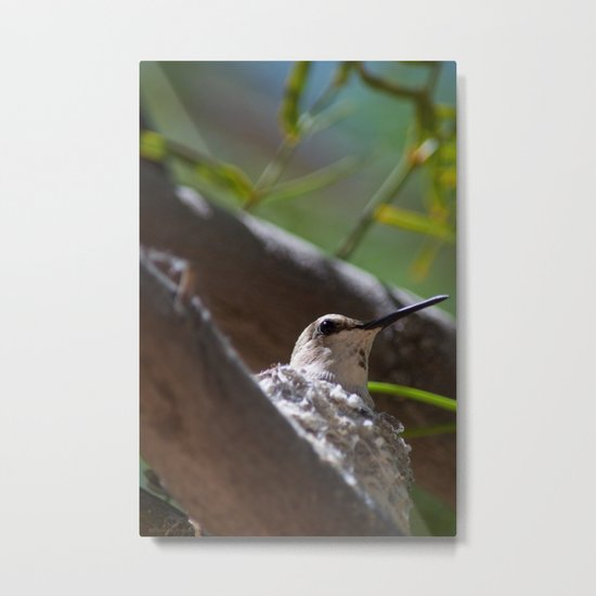 Hummingbird Momma Metal Print
