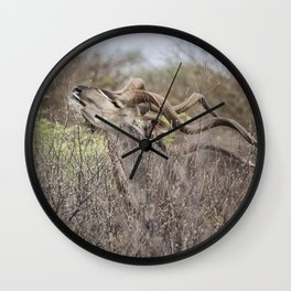 Male Greater Kudo Reaching for the Leaves Wall Clock