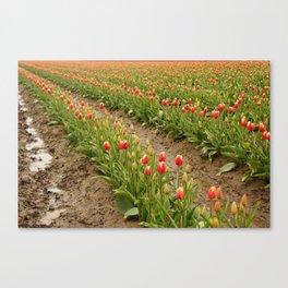 Tulip Rows Canvas Print