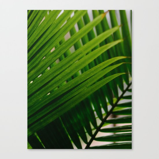 Tropical Lines Canvas Print