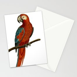 Parrot perroquet Stationery Cards
