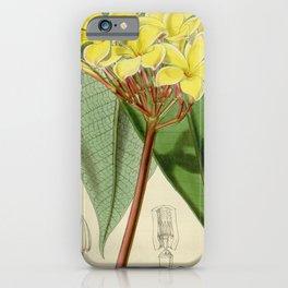 Flower 4751 plumieria jamesoni Jameson s Plumieria1 iPhone Case