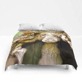 Lady Oak Comforters