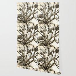 Leafless Tree in Winter I Wallpaper