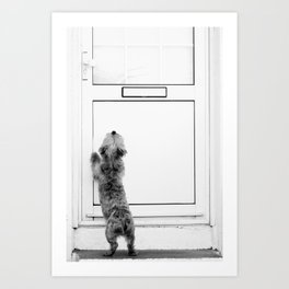 Locked Out & Out of Luck, Cranky Westie, Dublin Art Print