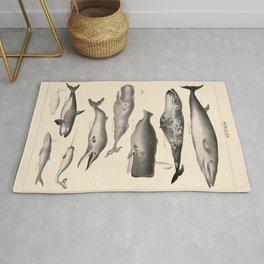 Whales Vintage Illustration Rug