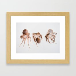 Octopi Framed Art Print